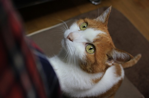 ブログNo.443(ダミーなのに?&困り猫)11
