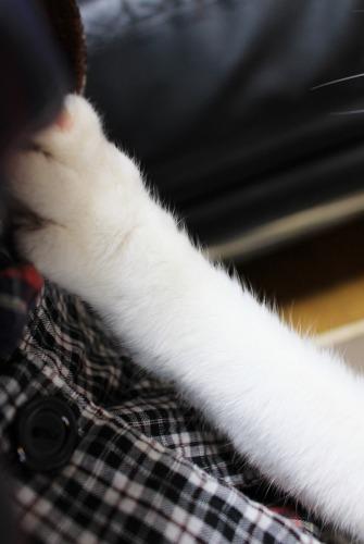 ブログNo.443(ダミーなのに?&困り猫)10