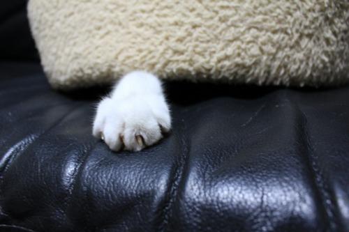 ブログNo.453穴に挟まったしっぽを振る猫(動画有り)2
