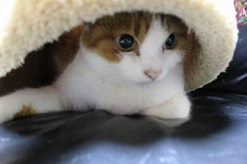 ブログNo.453穴に挟まったしっぽを振る猫(動画有り)3