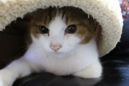 ブログNo.453穴に挟まったしっぽを振る猫(動画有り)4