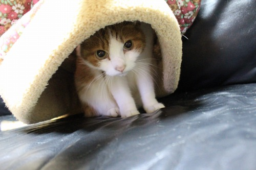 ブログNo.453穴に挟まったしっぽを振る猫(動画有り)6