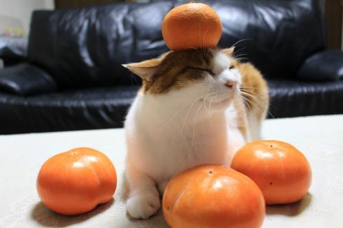 ブログNo.426(柿と猫と水滴&お知らせ)4