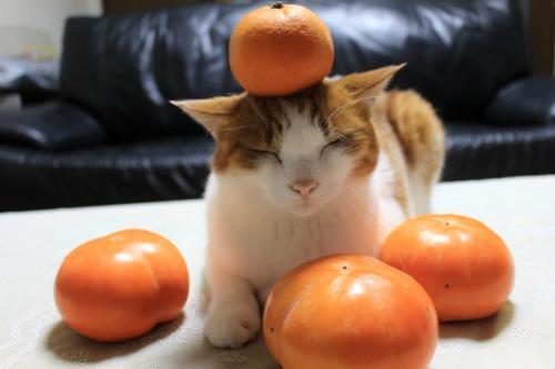 ブログNo.426(柿と猫と水滴&お知らせ)5