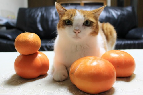 ブログNo.426(柿と猫と水滴&お知らせ)6