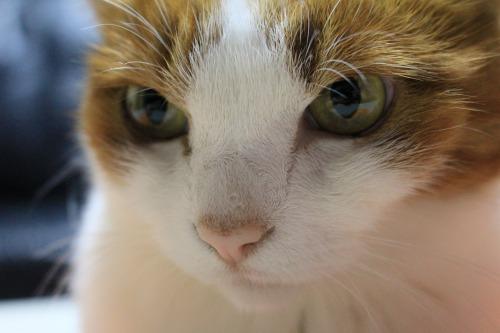 ブログNo.426(柿と猫と水滴&お知らせ)7