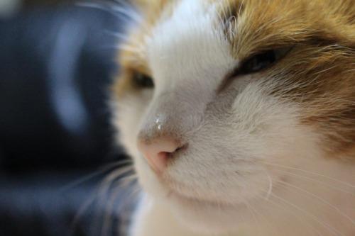 ブログNo.426(柿と猫と水滴&お知らせ)8