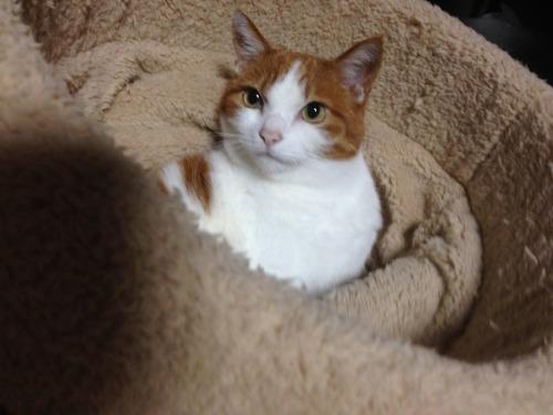 ブログNo.453穴に挟まったしっぽを振る猫(動画有り)10