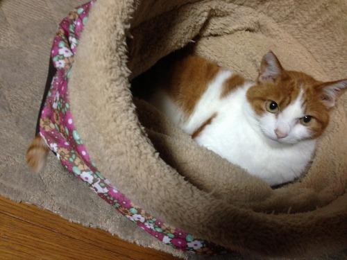 ブログNo.453穴に挟まったしっぽを振る猫(動画有り)12