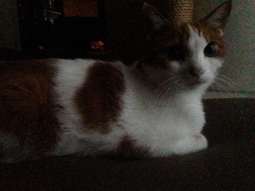 ブログNo.411(朝(ちょっと嬉しい)から夜までの猫)1
