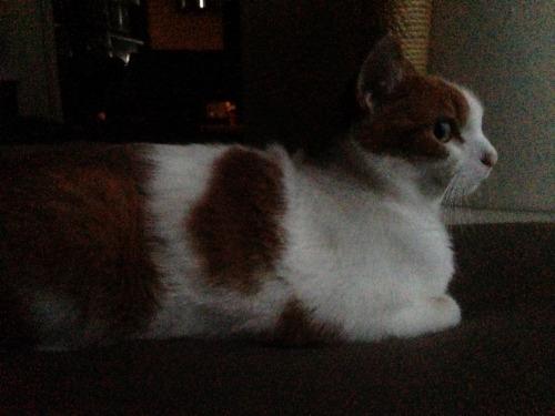 ブログNo.411(朝(ちょっと嬉しい)から夜までの猫)2