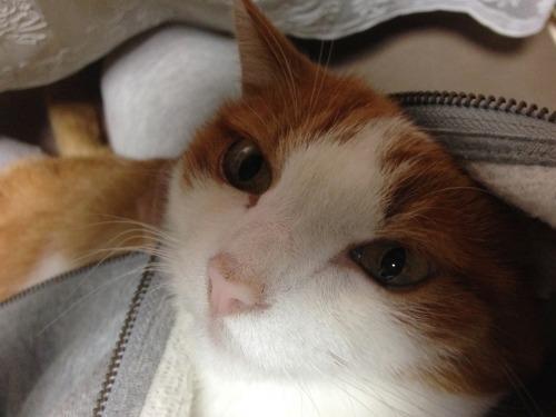 ブログNo.439(抱っこ嫌いの猫を抱っこ)8