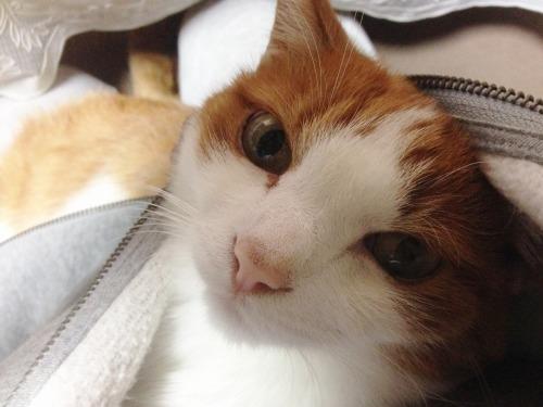 ブログNo.439(抱っこ嫌いの猫を抱っこ)9