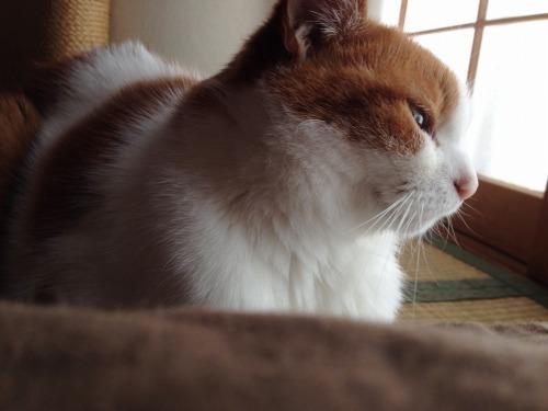 ブログNo.419(夕日と猫と影)18