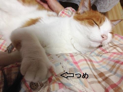 ブログNo.439(抱っこ嫌いの猫を抱っこ)2