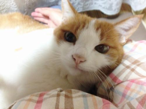 ブログNo.439(抱っこ嫌いの猫を抱っこ)3