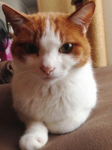 ブログNo.428(看病猫)4