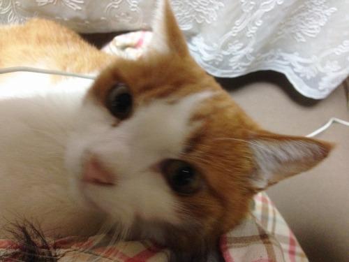 ブログNo.439(抱っこ嫌いの猫を抱っこ)5