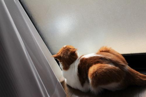 ブログNo.409(色々な表情の猫)1
