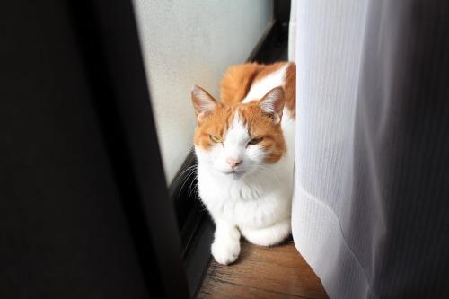 ブログNo.409(色々な表情の猫)3