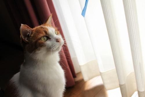 ブログNo.409(色々な表情の猫)6
