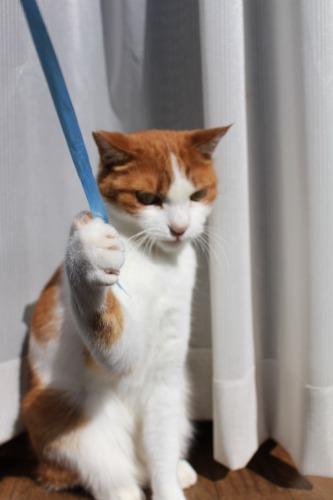 ブログNo.409(色々な表情の猫)13