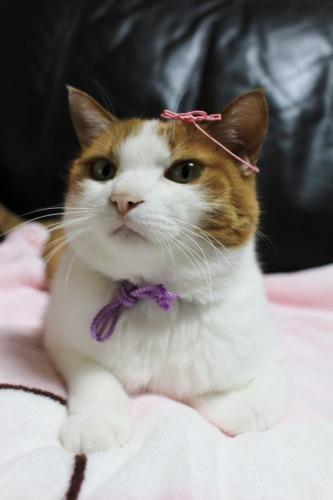 ブログNo.409(色々な表情の猫)18