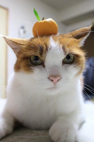 ブログNo.431(福来(ふくれ)みかんと猫)4