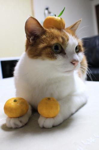 ブログNo.431(福来(ふくれ)みかんと猫)5