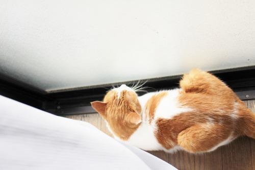 ブログNo.411(朝(ちょっと嬉しい)から夜までの猫)3