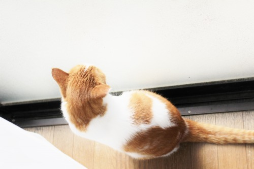 ブログNo.411(朝(ちょっと嬉しい)から夜までの猫)4