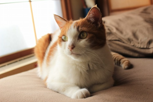 ブログNo.411(朝(ちょっと嬉しい)から夜までの猫)7