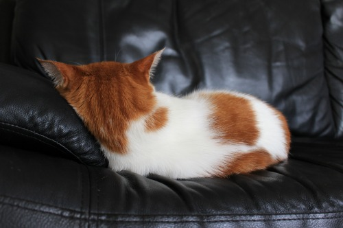 ブログNo.411(朝(ちょっと嬉しい)から夜までの猫)8