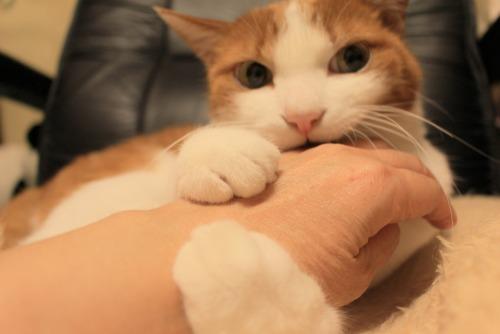 ブログNo.411(朝(ちょっと嬉しい)から夜までの猫)13