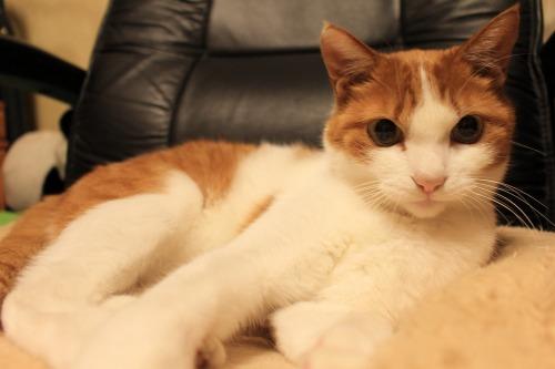 ブログNo.411(朝(ちょっと嬉しい)から夜までの猫)14