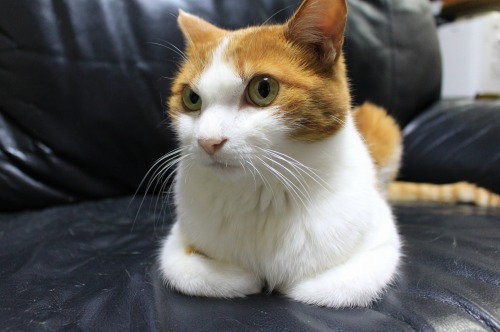 ブログNo.411(朝(ちょっと嬉しい)から夜までの猫)16