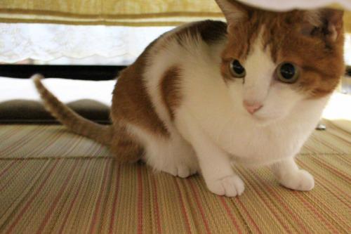 ブログNo.411(朝(ちょっと嬉しい)から夜までの猫)18