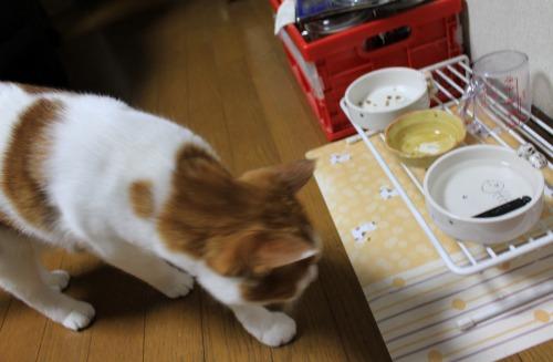 ブログNo.413(大変!!どうしよう)6