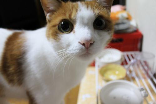 ブログNo.413(大変!!どうしよう)10