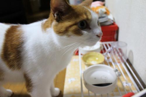 ブログNo.413(大変!!どうしよう)11