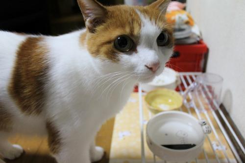 ブログNo.413(大変!!どうしよう)12