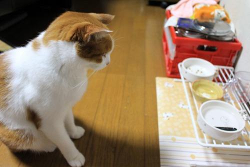 ブログNo.413(大変!!どうしよう)13