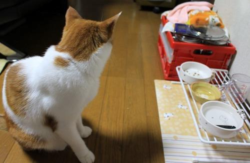 ブログNo.413(大変!!どうしよう)14