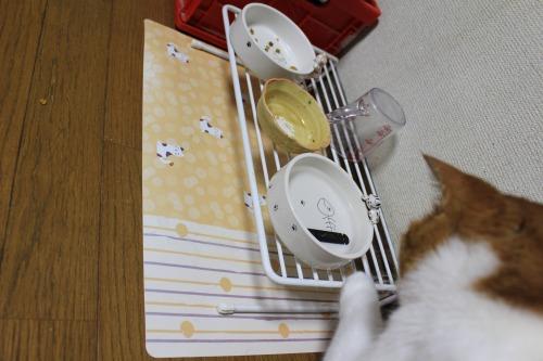 ブログNo.413(大変!!どうしよう)23