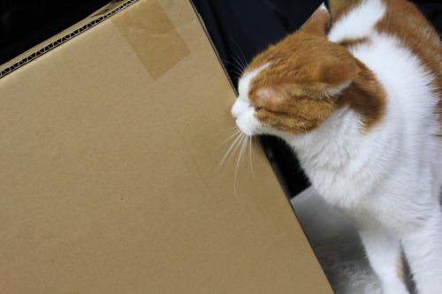 ブログNo.437(ホットカーペットと潰れ猫)1