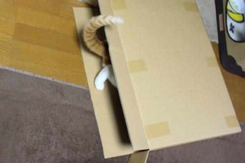 ブログNo.437(ホットカーペットと潰れ猫)3