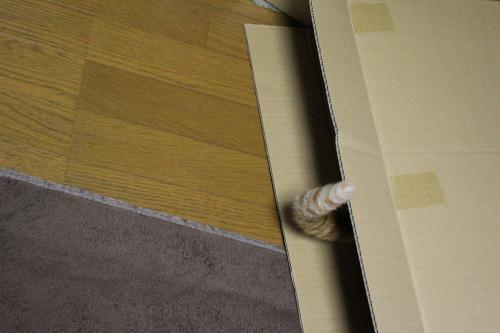 ブログNo.437(ホットカーペットと潰れ猫)4