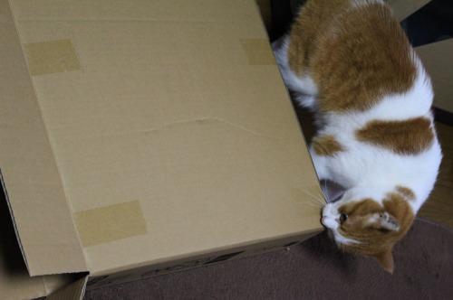 ブログNo.437(ホットカーペットと潰れ猫)6