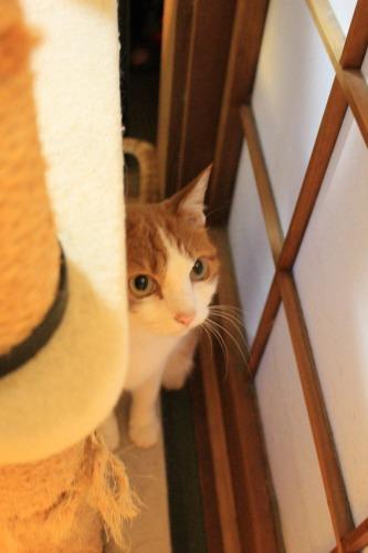 ブログNo.414(猫を被っていた猫)1
