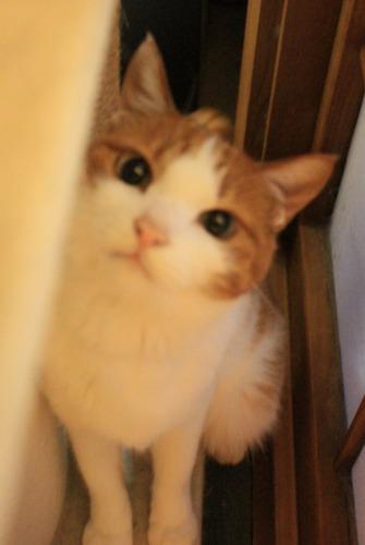 ブログNo.414(猫を被っていた猫)2
